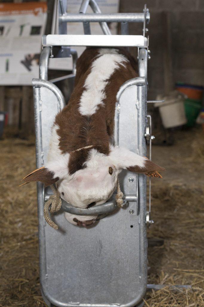 Tonte parfaite grace au Kit complet tondeuse Réf. 47017 Express Farming