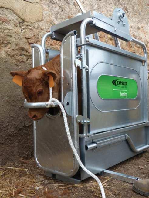 Cage de contention pour bovins Réf. 47009 en situation